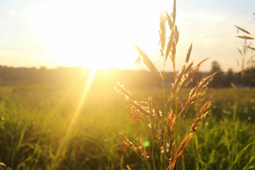 Güneş Işınlarının Zararları
