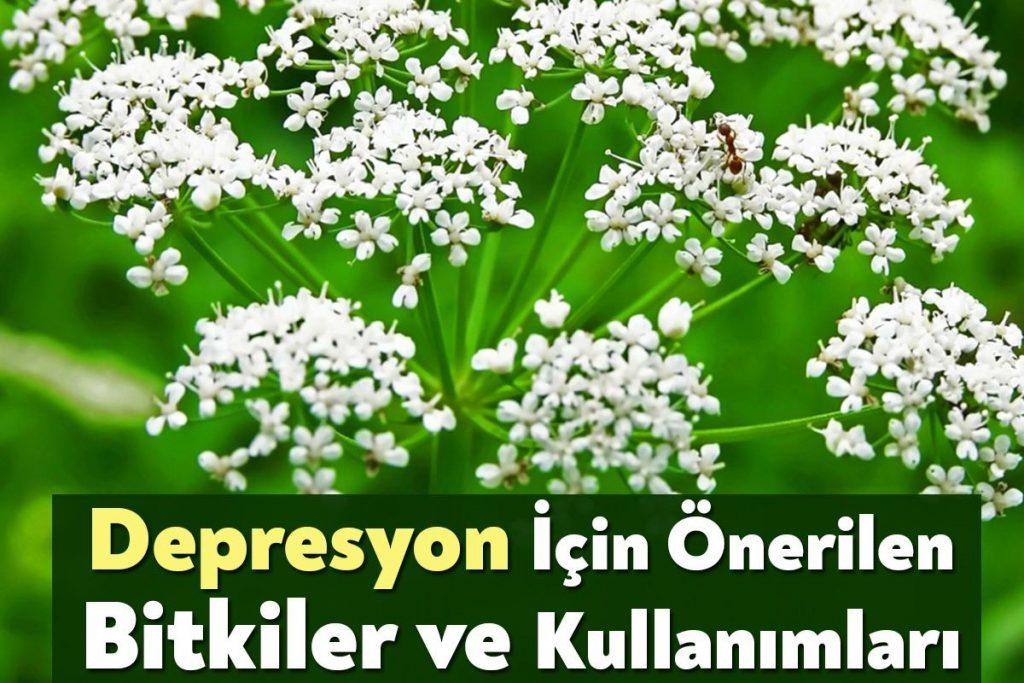 Depresyon için Önerilen Bitkiler ve Kullanımları