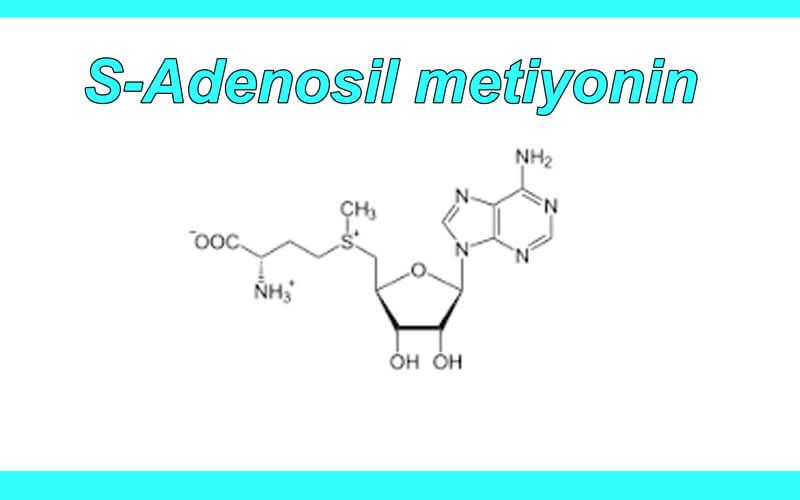 S-Adenosil metiyonin
