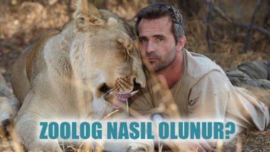 Zoolog Nasıl Olunur? Zoolog Maaşları Ne Kadar?