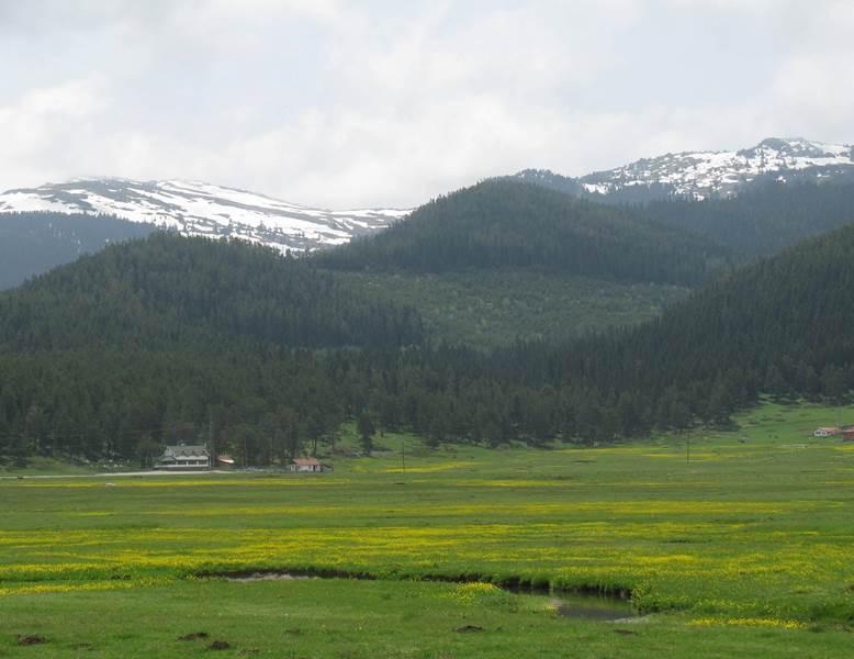 Sarıalan Yaylaları Kamp Alanı