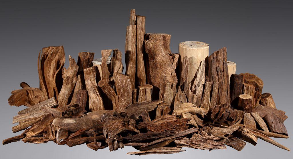 agar ağacı yağı faydaları