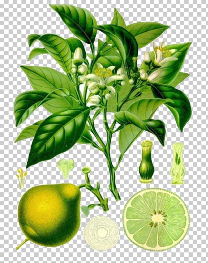 calamondin yağı nasıl kullanılır