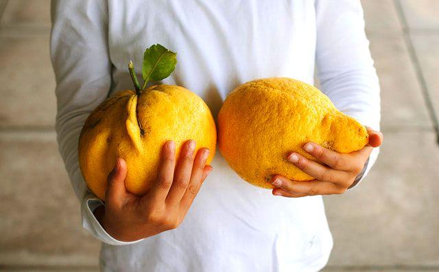 citron yağı nerede kullanılır