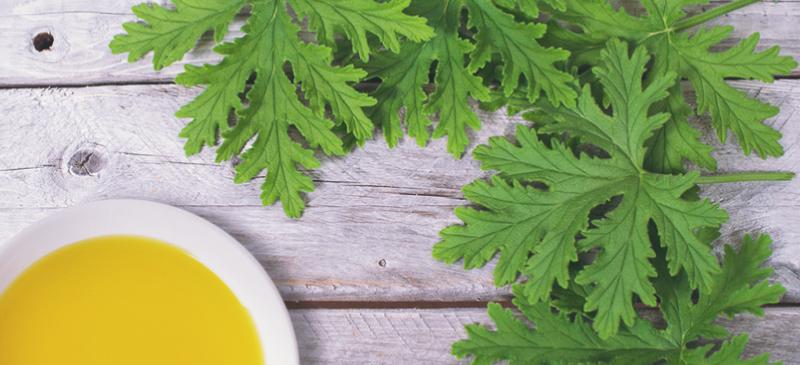 citronella yağı kullanımı
